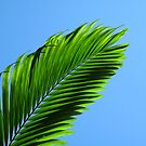 Palm by Oliver Parish
