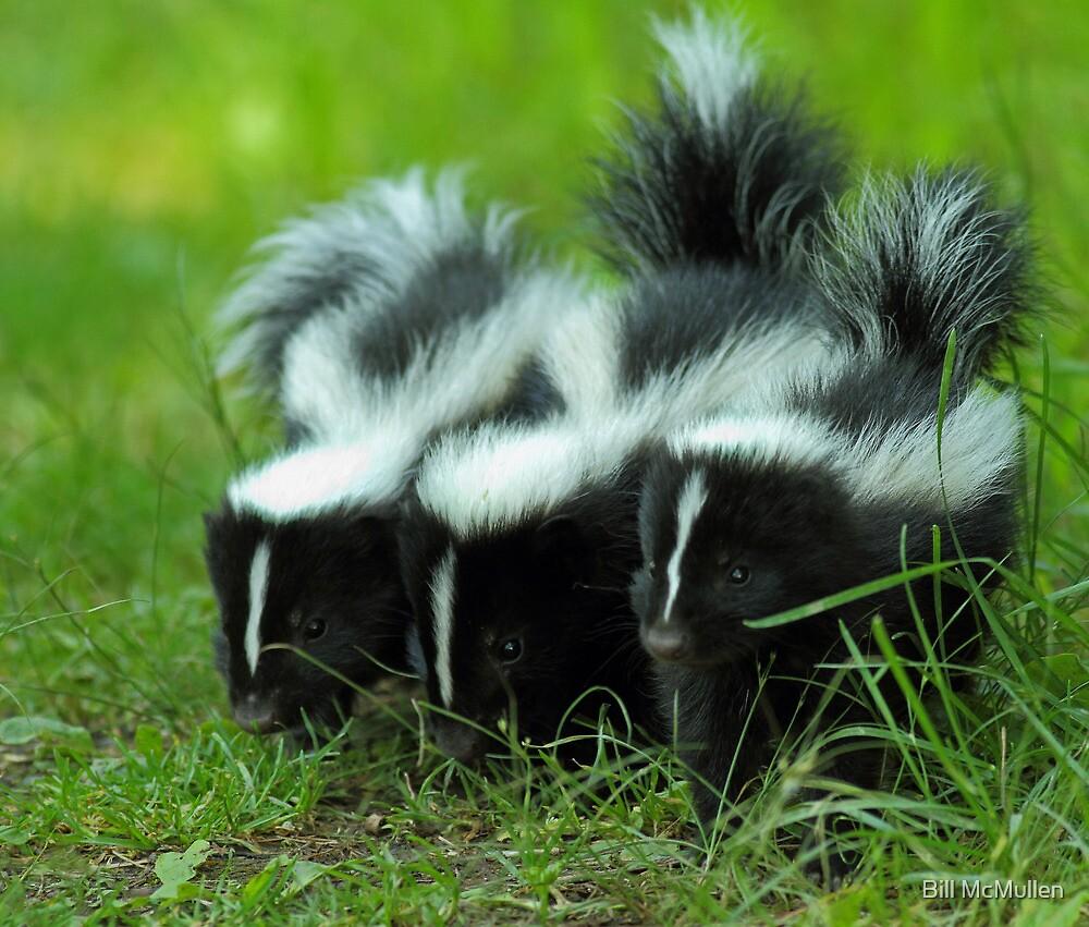 Baby Skunk Trio by Bill McMullen