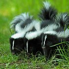 Baby Skunk Trio by Bill McMullen
