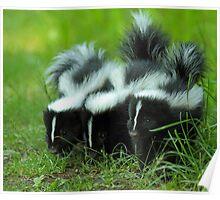 Baby Skunk Trio Poster