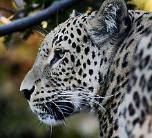 Leopard by Joy Watson