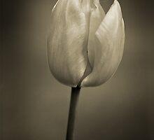 Bloom by Jack Jansen