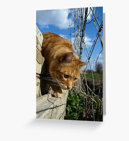 On a mouse hunt Greeting Card