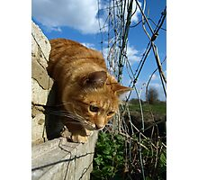 On a mouse hunt Photographic Print