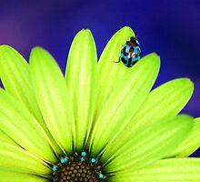 Bright Bug Blue by Bronwyn Bruce