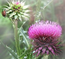 Thistle by Nadya Johnson