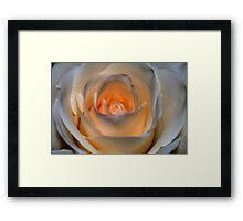 Peachy White Rose Framed Print