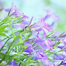Flowers in Spring by Chris Armytage™