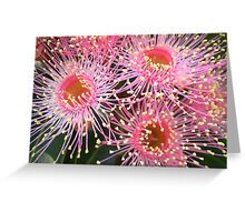 Tiny pink flower of the Eucalyptus Tree Greeting Card