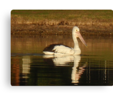 Pelican Reflected Canvas Print