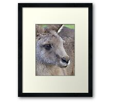 wallaby portrait Framed Print