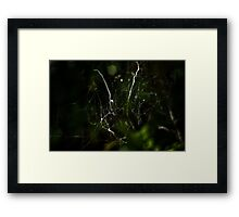 Intricate Nature Framed Print