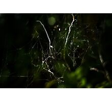 Intricate Nature Photographic Print