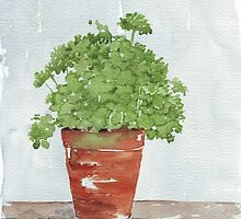 Parsley in a Pot by Maree  Clarkson