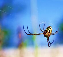 Well, Hello There, Mr Spider! by Margo Naude