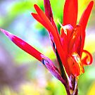 Canna Bright by Kylie Van Ingen