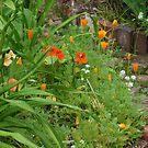 Summer Garden by DarylE