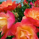 Roses by DarylE