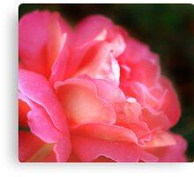 Pink Rose - Close Up Canvas Print