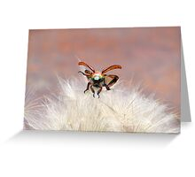 Christmas Beetle Macro  Greeting Card