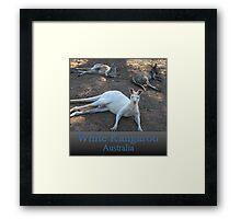 White Kangaroo Framed Print