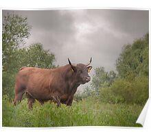 The bull Poster