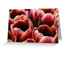 Tulip Cluster Greeting Card