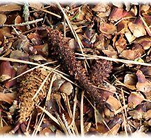 Textures - bed of cones by vigor