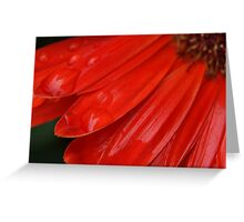 rain drops on my petals Greeting Card