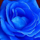 'Blue Rose' by BigAndRed