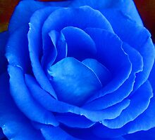 'Blue Rose' by BigAndRed