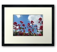 Flower Soldiers Framed Print