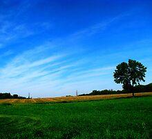 Iowa Fields by Linda Miller Gesualdo