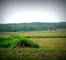 Country Fields by Linda Miller Gesualdo