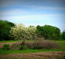 Little Tree In The Country by Linda Miller Gesualdo