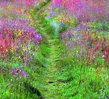 Path to the woods. by Sandra Lock