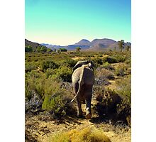 A walk in the Wild Photographic Print