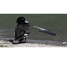 The Tufted Duck Photographic Print