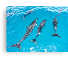 Spinner Dolphins Bow Riding Canvas Print