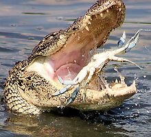 Alligator Catching a Blue Crab by Paulette1021