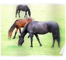 Three Young Stallions Poster