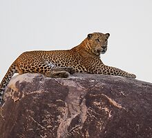 Sri Lankan Safari - Photography by Neil Bygrave by Neil Bygrave (NATURELENS)