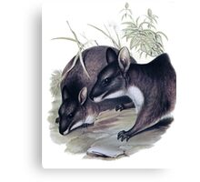 The Parma wallaby painting Canvas Print