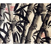 Bamboo  Strokes Photographic Print