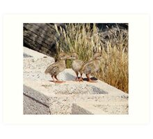 """""""Where are our Parents"""" (Gambel's Quail babies) Art Print"""