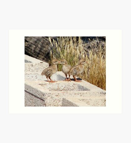 """Where are our Parents"" (Gambel's Quail babies) Art Print"