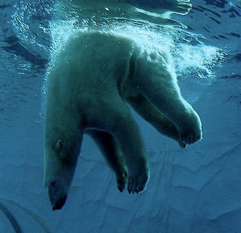 Underwater Games by lilynoelle