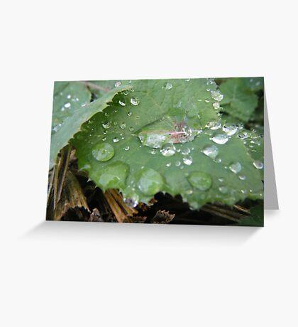 Winter Rains Greeting Card