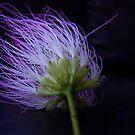 Einsteins Flower by Sunshinesmile83