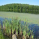 Hemlock Lake On A Summer Day by teresa731